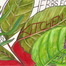 Herbs for my Kitchen